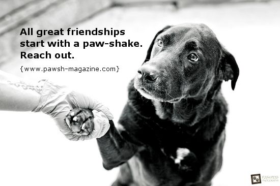 Quotes About Dogs Being Family Posted On 01 11 2013 By Laura Benn
