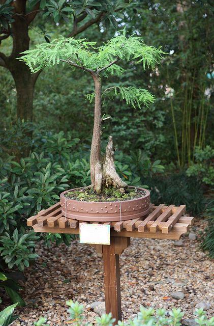Bonsai Tree With Images Bonsai Tree Types Bonsai Garden