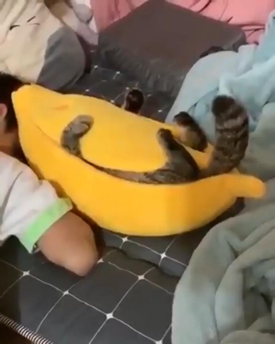 Photo of Er mag sein neues Bett sehr