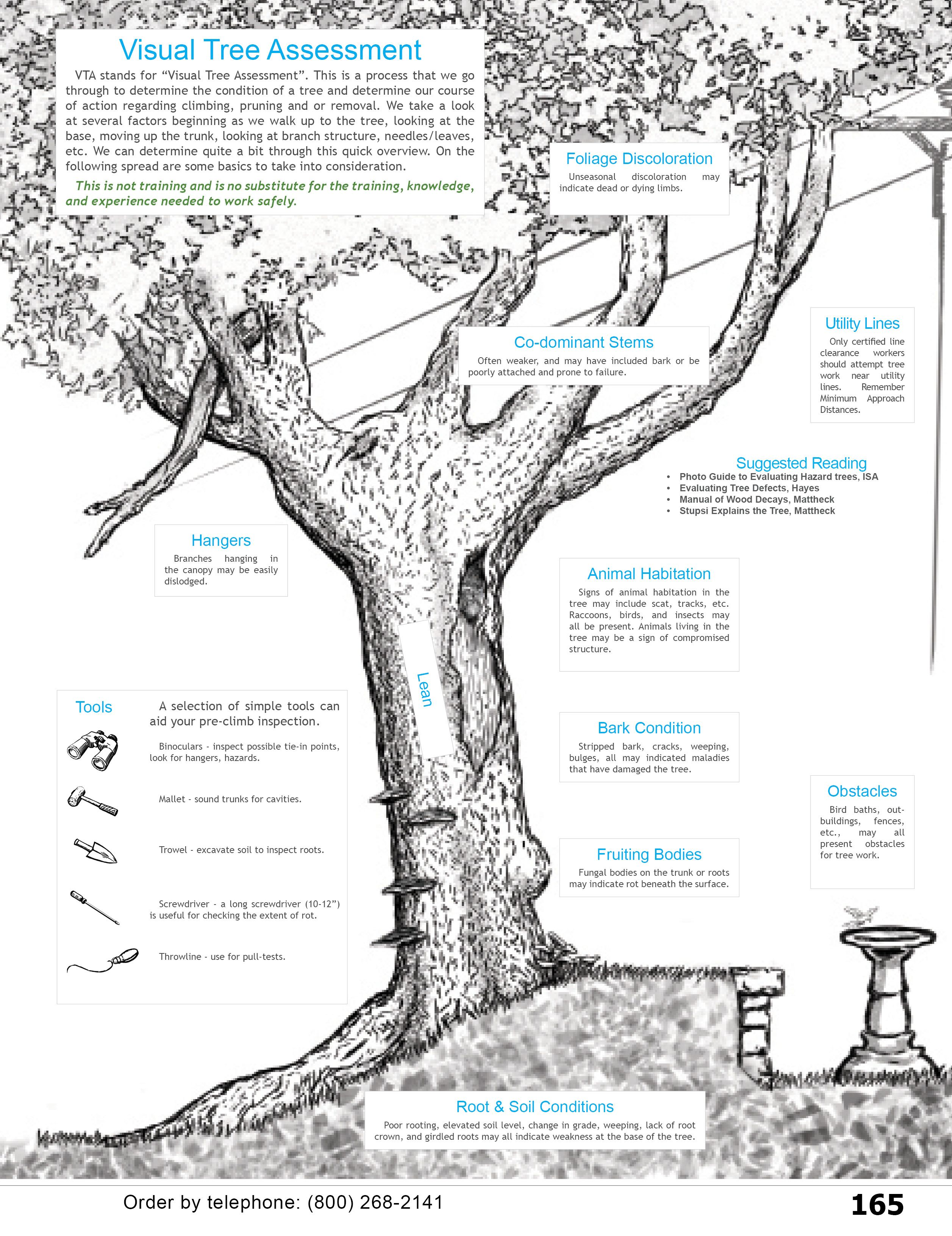 Visual Tree Assessment For Arborists Homeowners Landscapers Etc