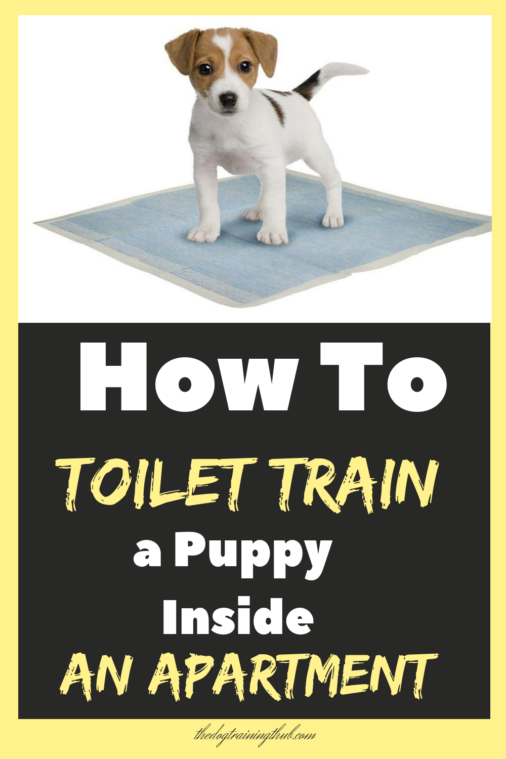 9 Puppy Toilet Training Tips To House Train Your Dog With Images