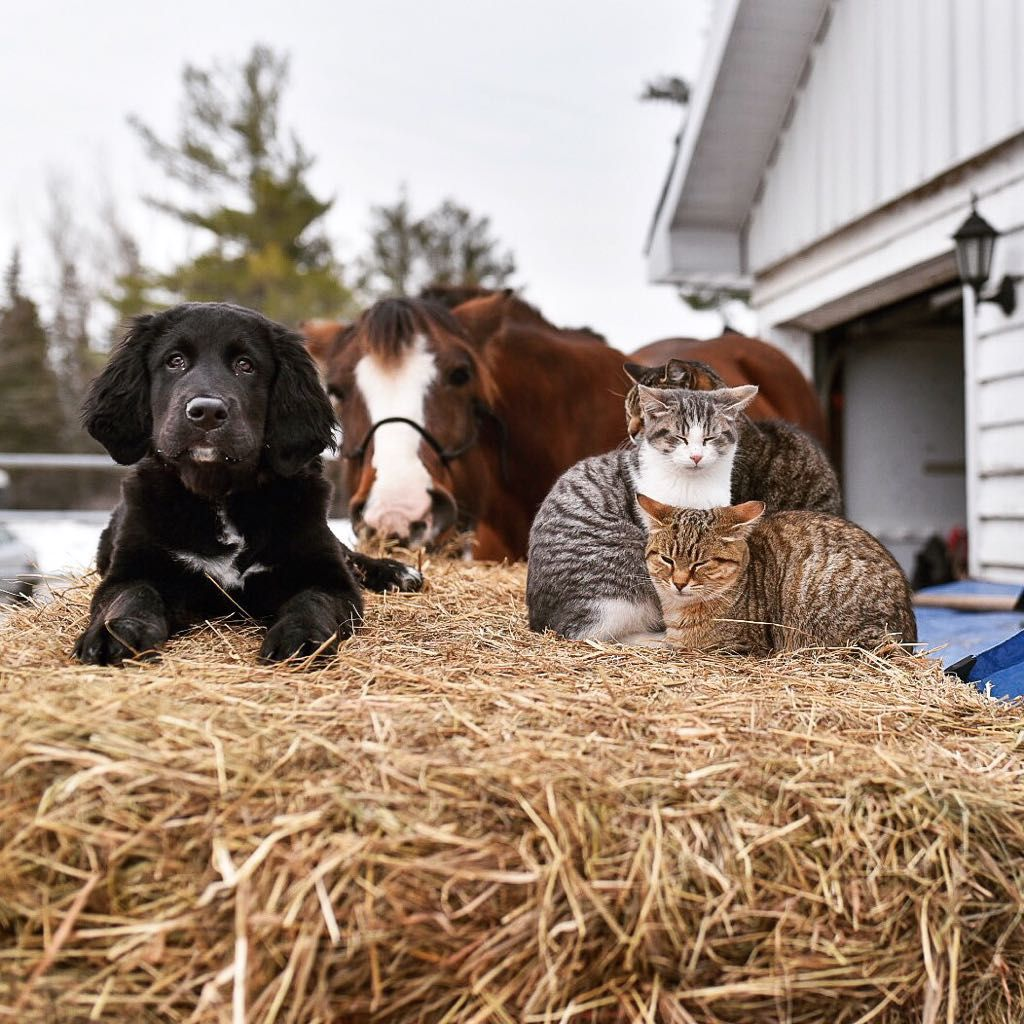 Attentive puppy kitty pile horse photo bomb = ultra cute