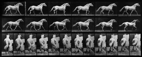 Animal Locomotion: Plate 596 (Horse)