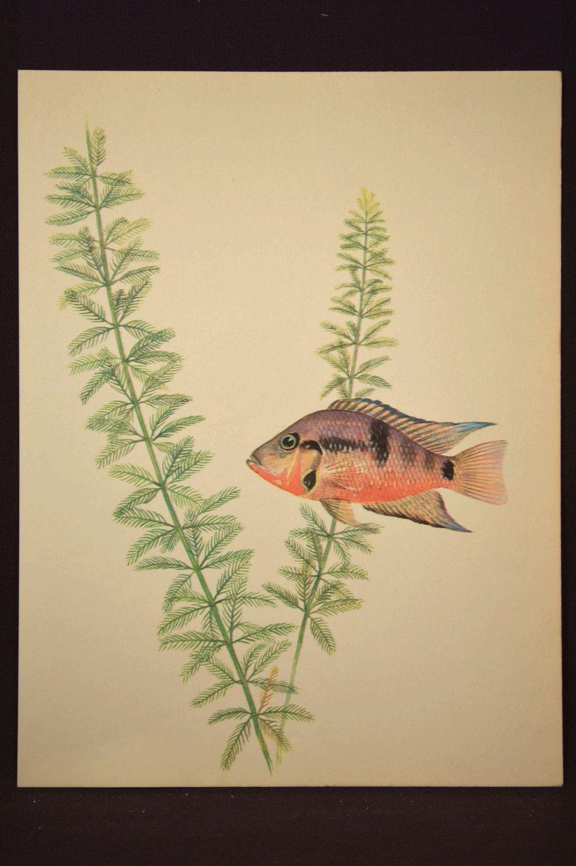 Aquarium Fish Print Tropical Fish Wall Art Decor Aquatic Plant ...