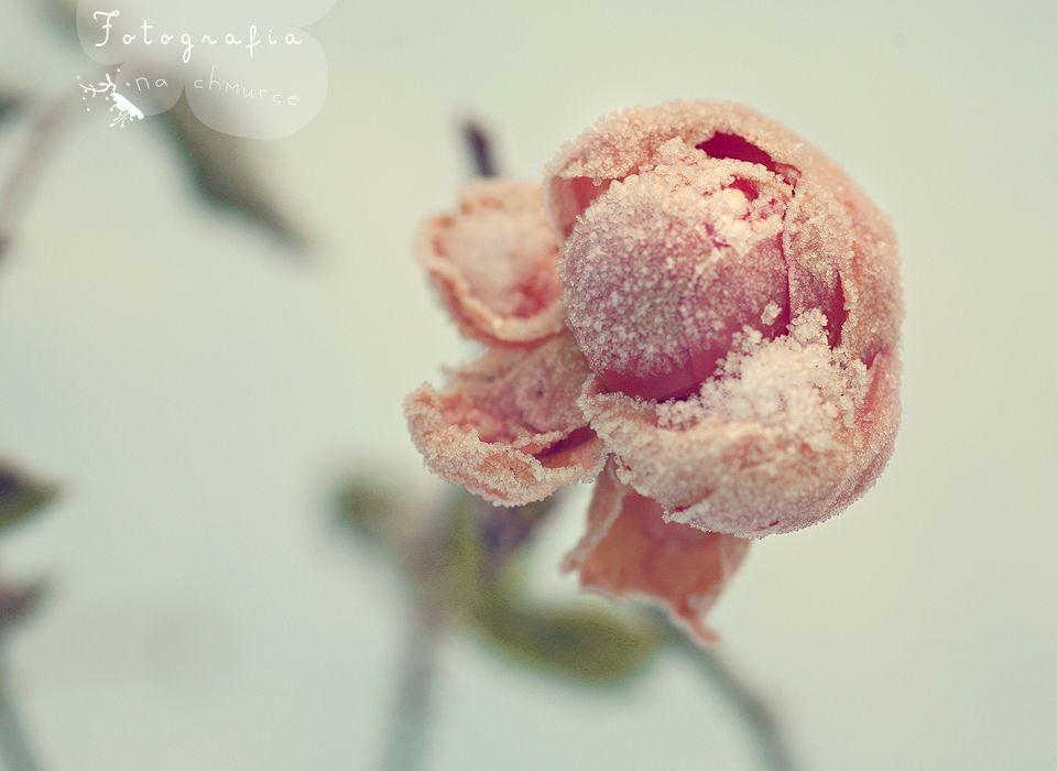 Tam gdzie mgły i róże mieszkają...: Mój ogród...