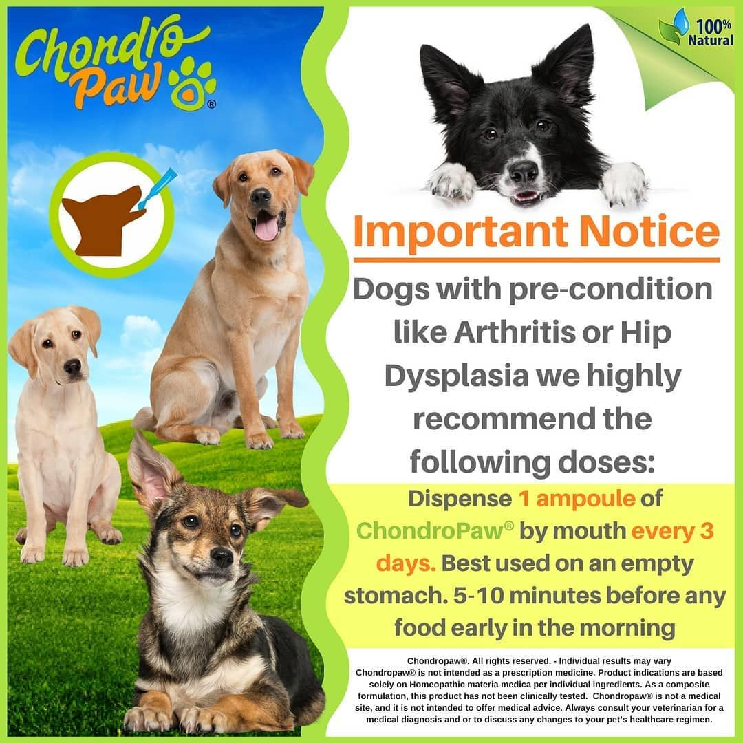 IMPORTANT NOTICE Dogs with precondition like Arthritis