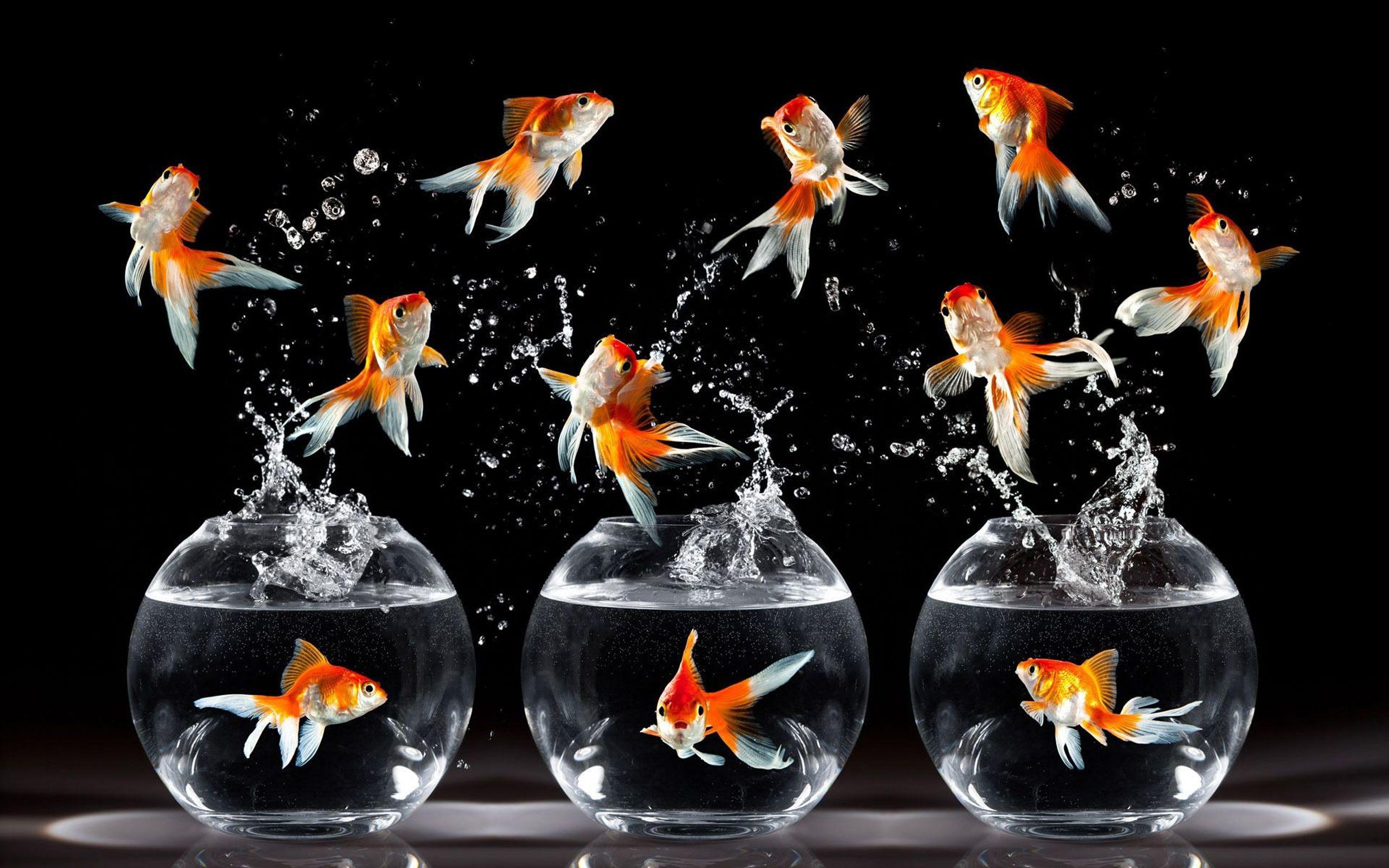 Fish in aquarium desktop wallpaper - Jewelry Desktop Backgrounds Hd Star Fish Desktop Aquarium Happy And Water Hd 2560x1600 Hd Wallpaper