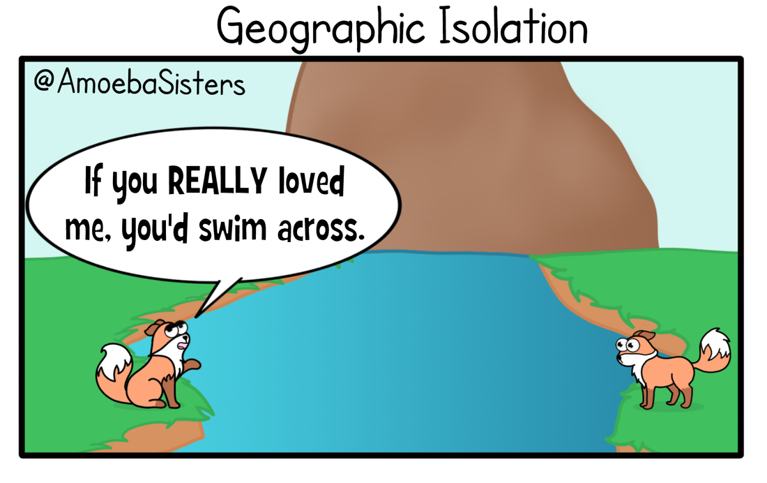 Why does geographic isolation cause speciation?