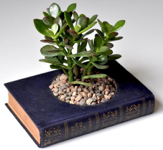 Sukkulenten In Korkstopsel Anlegen Eine Tolle Deko Idee , Ein Buch Aushöhlen Und Darin Eine Pflanze Platzieren Tolle Idee