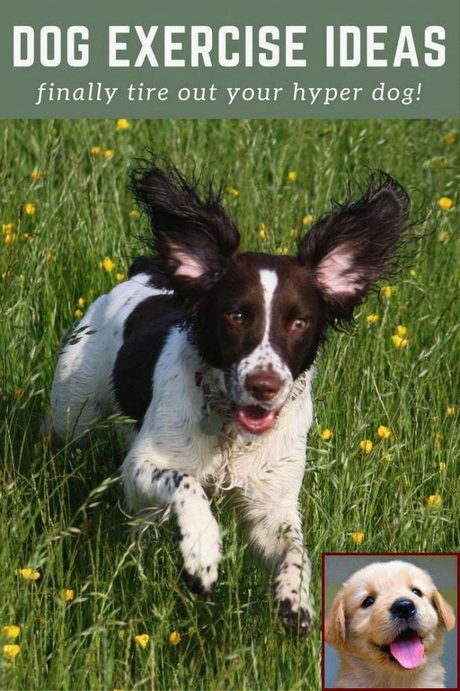 Chihuahua Puppy Care Life Puppycarebathing Hyper Dog Dog