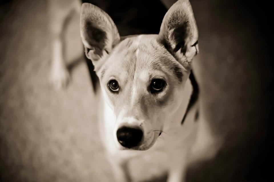 Basenji mix dog training near me best dog breeds dog