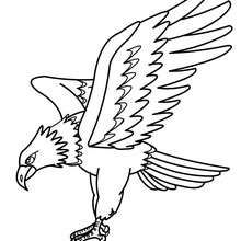 Eagle picture to color - Coloring page - ANIMAL coloring pages ...