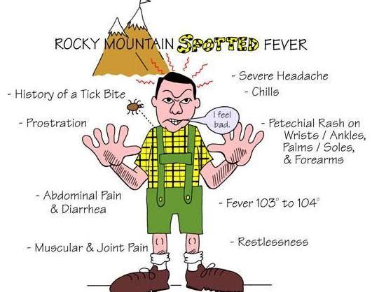 Spotted fever rash photos