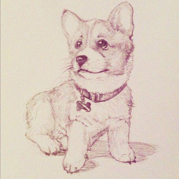 quick sketch drawing illustration sketch cute puppy corgi