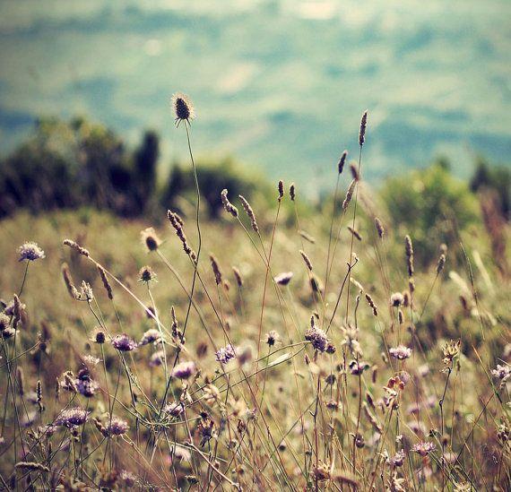 Beautiful nature photography still, $12.00