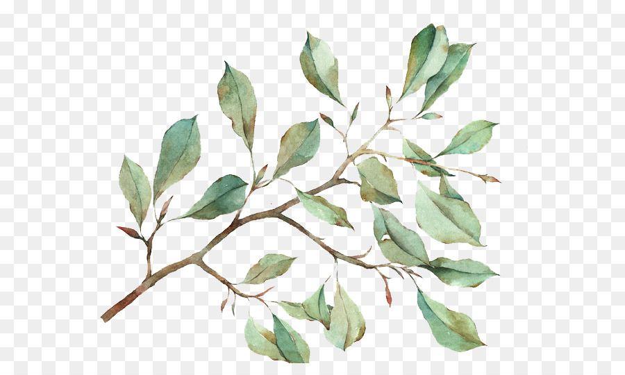 H916 Watercolor Leaves Watercolor Art Plant Aesthetic Gambar Dedaunan Kartun Hd Png Download Watercolor Splash Png Watercolor Circles Watercolor Leaves
