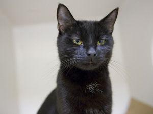 Adopt Mason on Cute animals, Cat adoption, Cat love