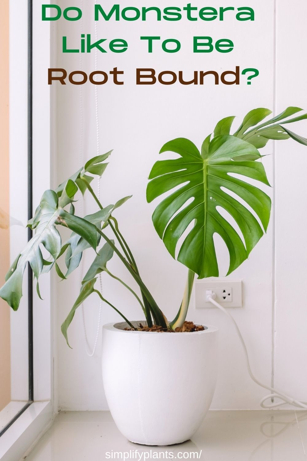 Do Monstera Like To Be Root Bound Monstera Plant Guide Plant Problems