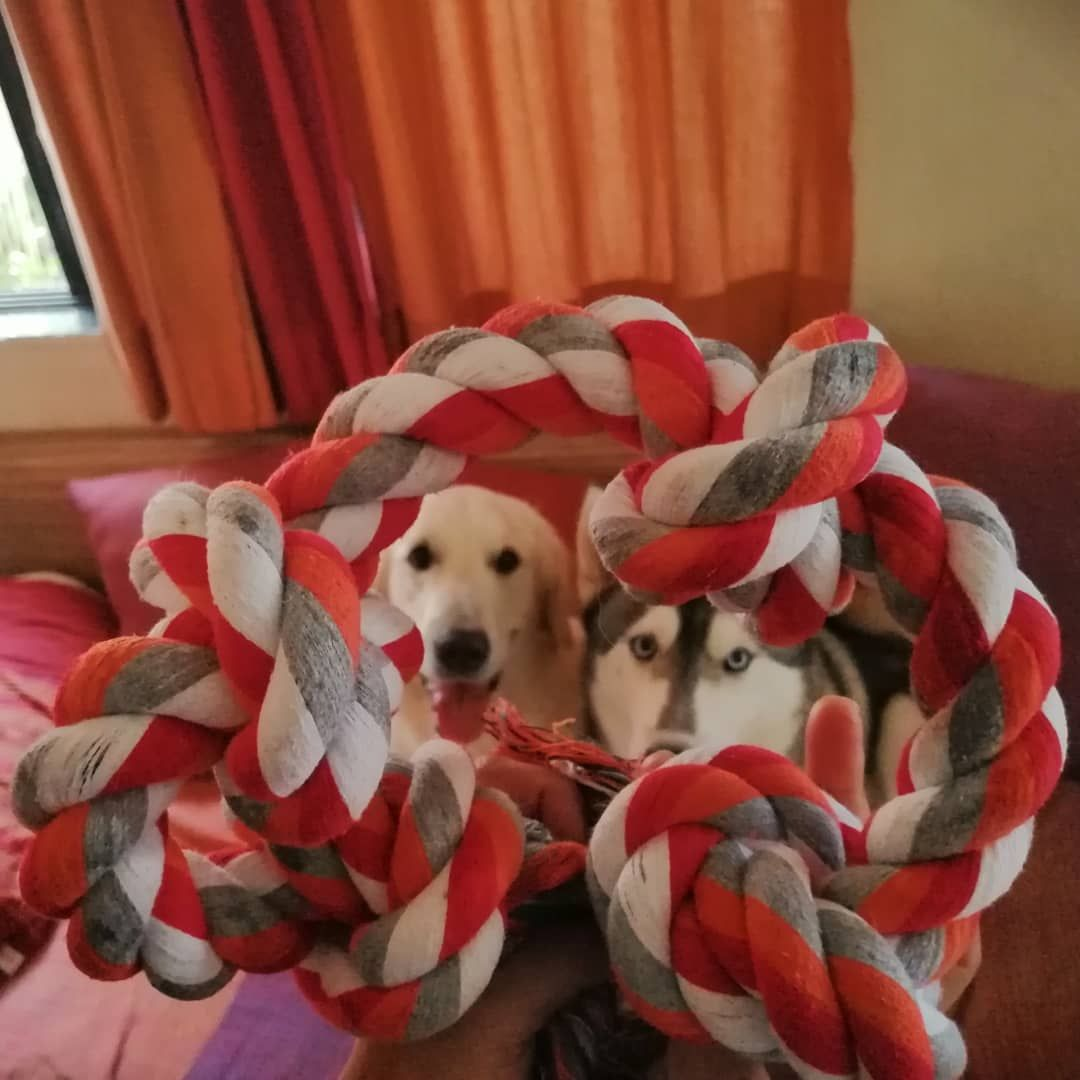Dog Toys Chew Champ Rope Online In India Dog Toys Interactive