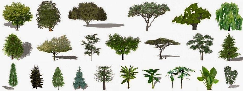 Arquitetura com Sketchup: ARQUIVO - PLANTAS, ÁRVORES E ARBUSTOS PARA O SKETCHUP