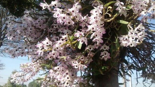 Orquídeas. Outono. São José dos Campos. São Paulo, Brasil.