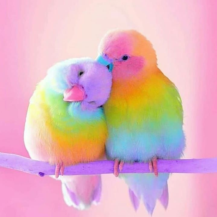 These birds are like gorgeous '80s candy from heaven.