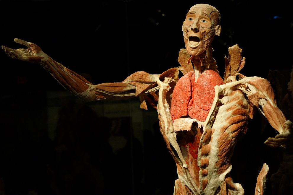 Body Worlds — Traveling Exhibit | Community Post: 22 Destinations Science Nerds Need To See Before They Die