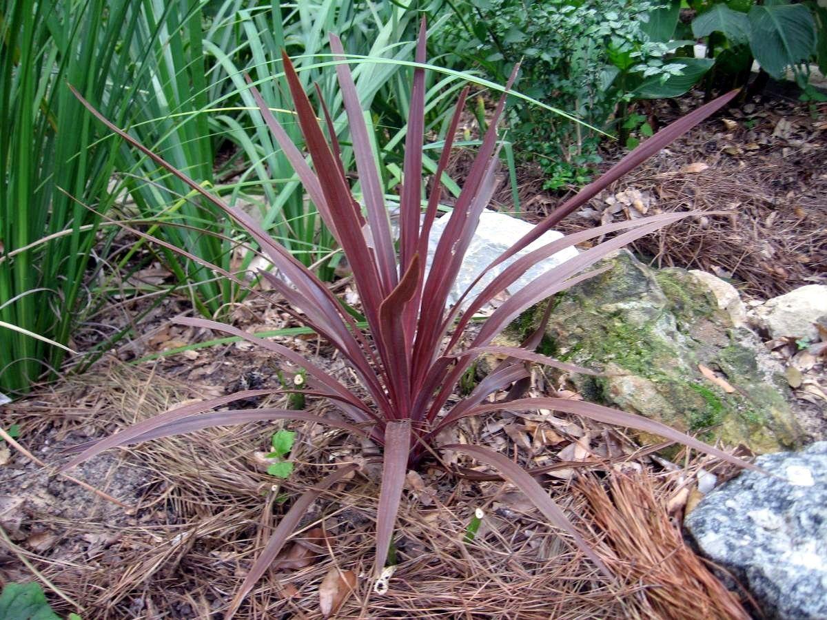 Apalacheehills Plants Foliage Plants Perennials