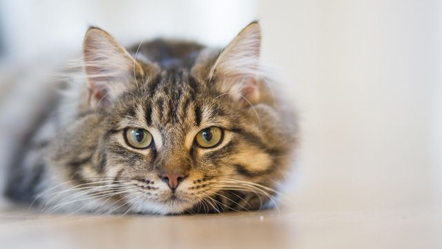 0f8b86517ae1dd729383317c0bbfdc91 - How To Get Knots Out Of A Long Haired Cat