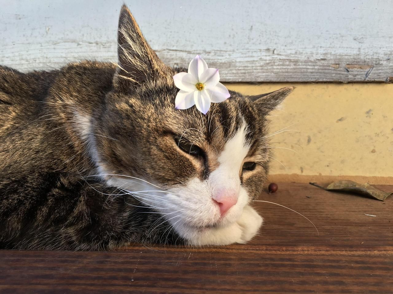 Cats Center Cute cats photos, Cats, Kittens cutest