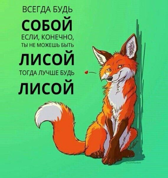 Смешные картинки лиса работает, новым