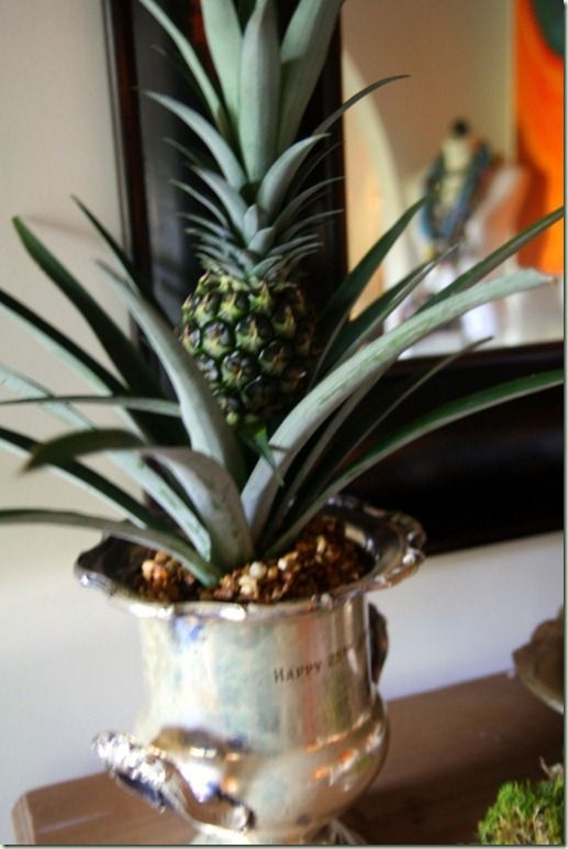 baby potted pineapple via lime in the coconut holiday style challenge pinterest ananas. Black Bedroom Furniture Sets. Home Design Ideas