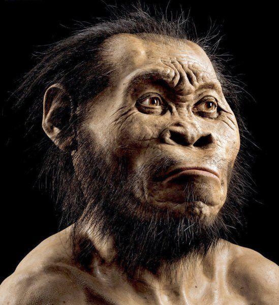 Rekonstruktion eines H. naledi: Diese Menschen waren wohl um die 1,50 Meter...