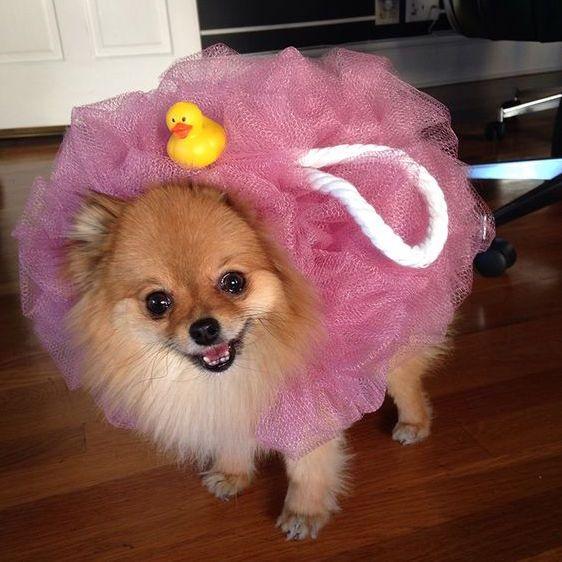 Diy dog costumes maskerix diy dog costume ideas 2017 pinterest diy dog costumes maskerix solutioingenieria Image collections