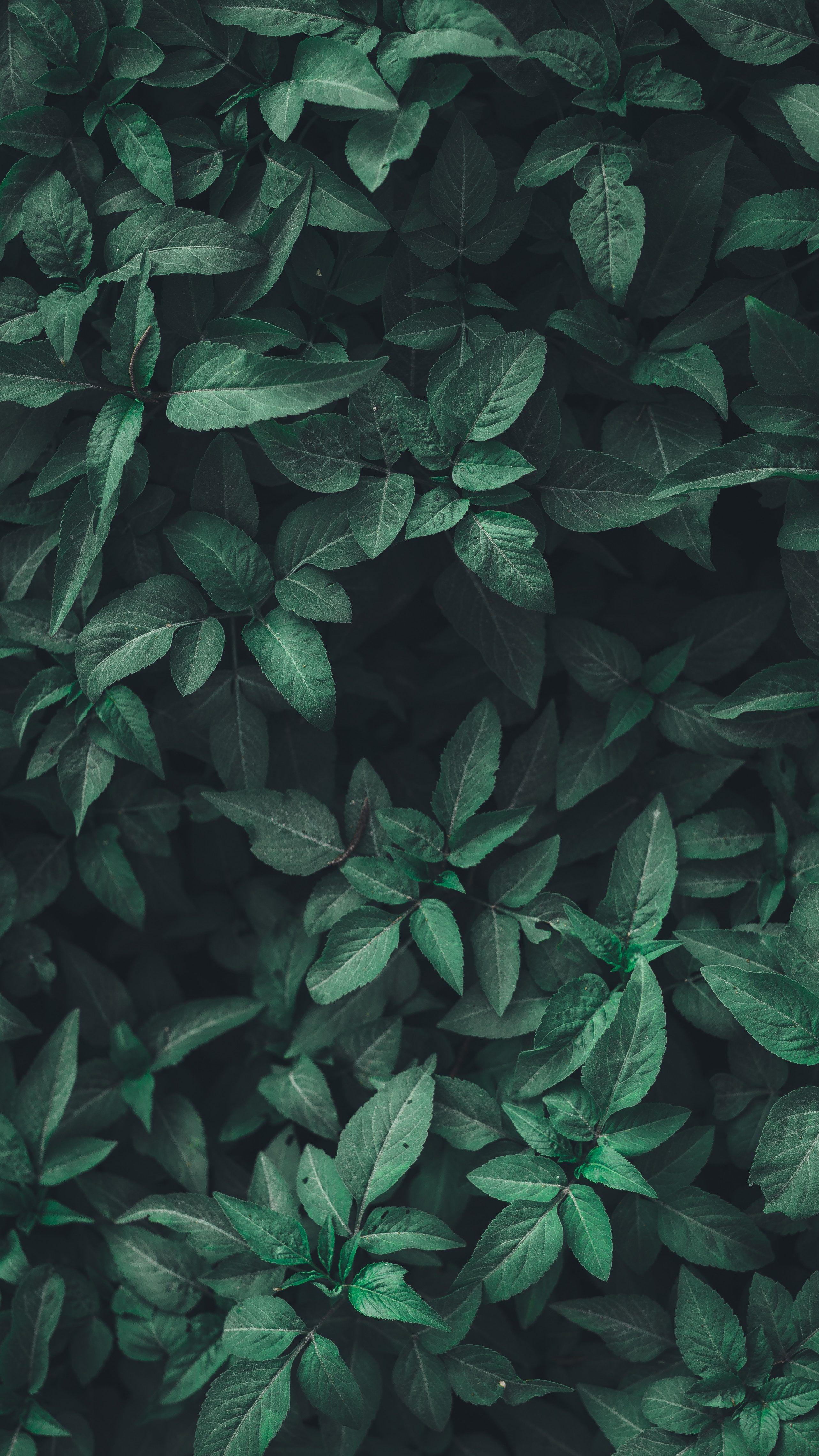 Blog Jardiner Fute En Permaculture In 2020 Plant Wallpaper Green Aesthetic Plant Background