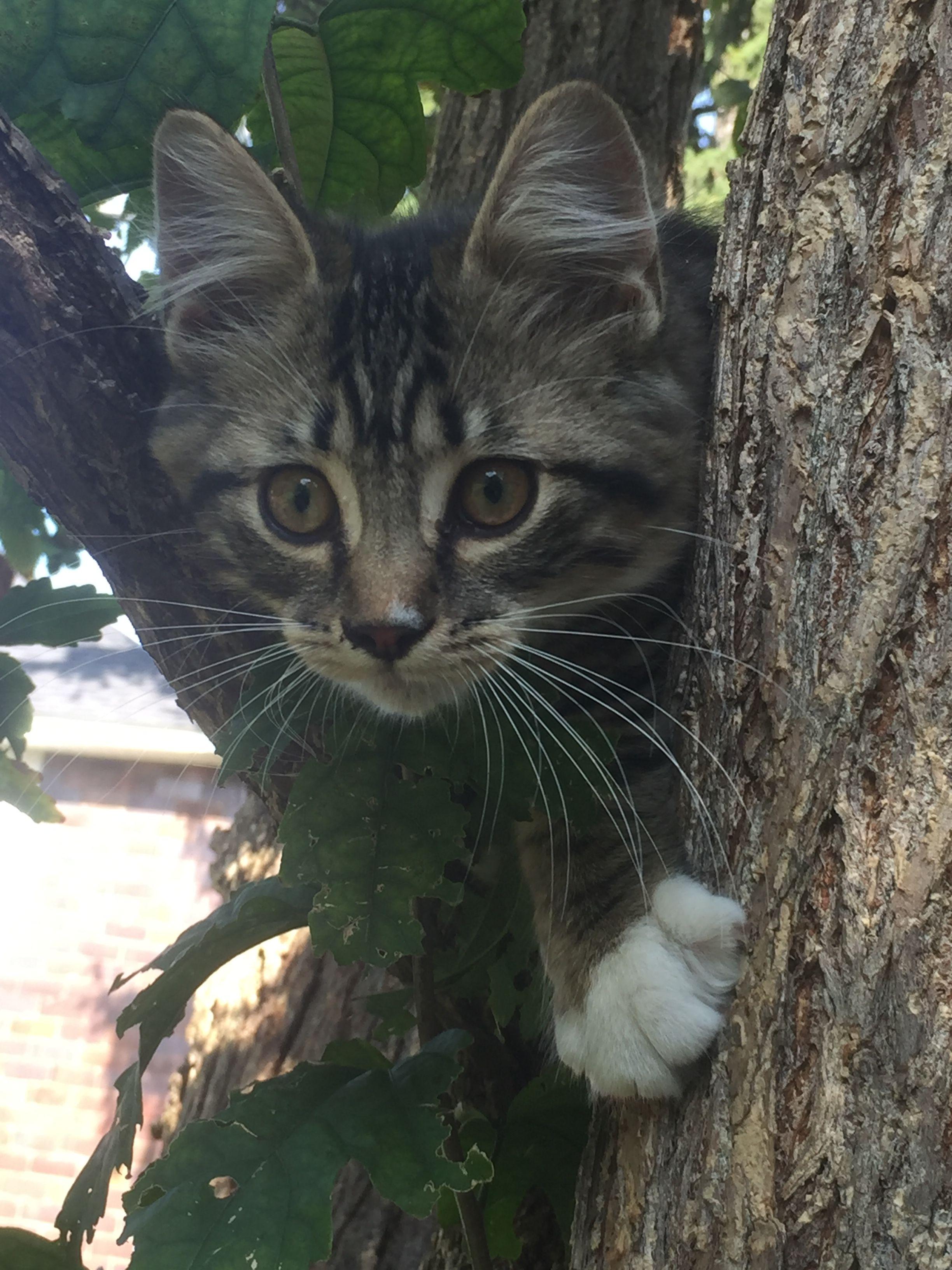 Akasha 猫 写真, 猫, 写真