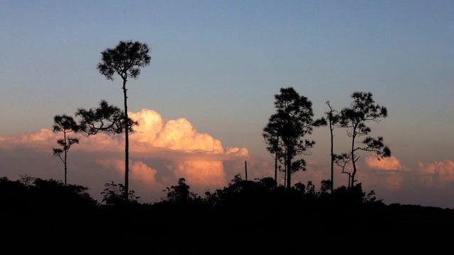Trump thinks wildland resources serve only as cash