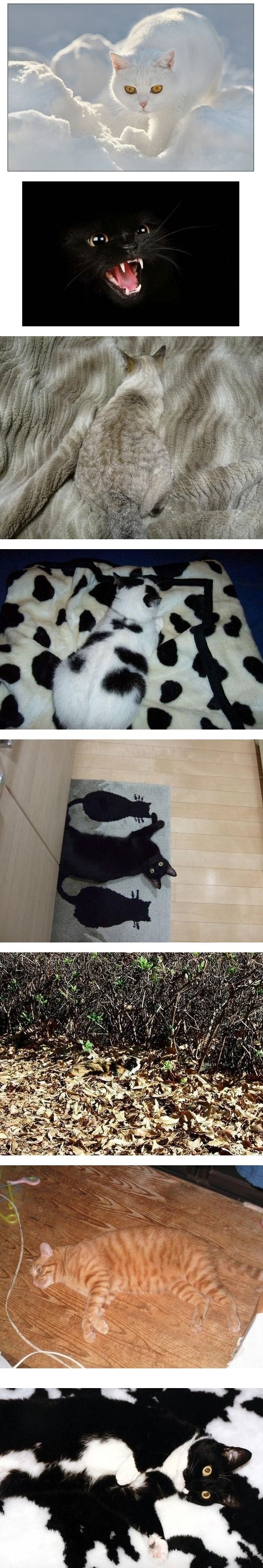 Invisible cats.  The pinnacle in the art of camouflage.