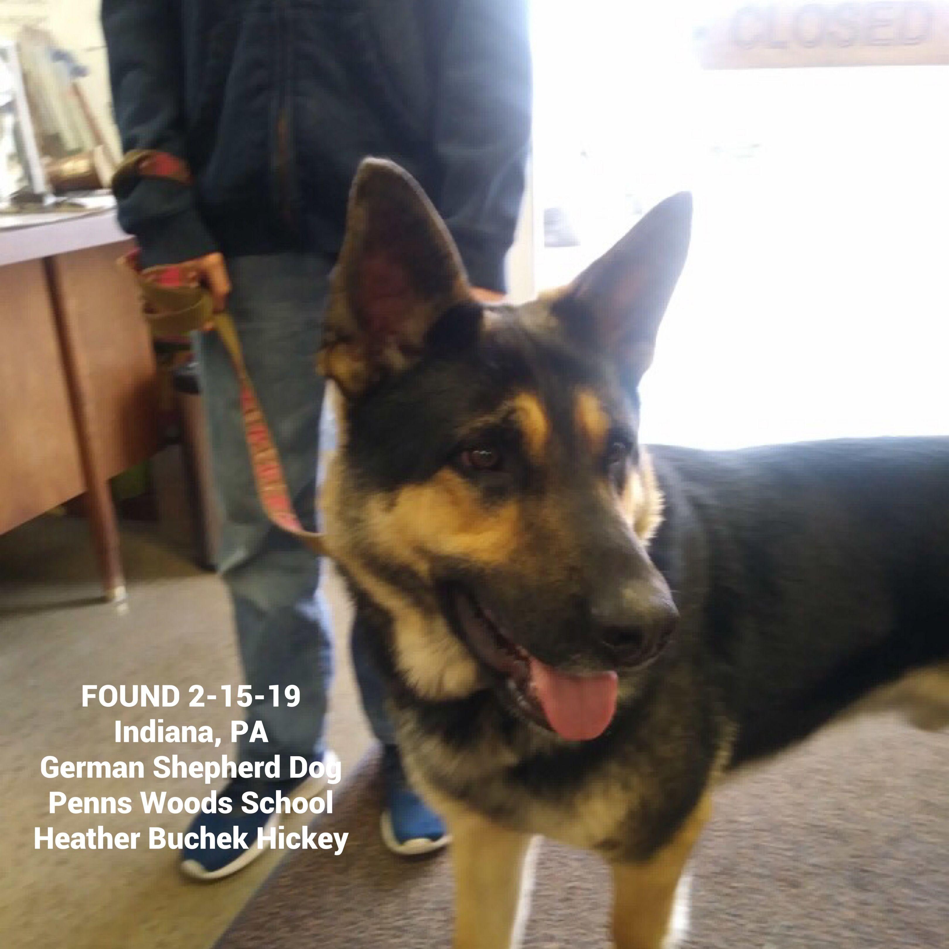 FOUNDdog 21519 Indiana, PA GermanShepherdDog Penns
