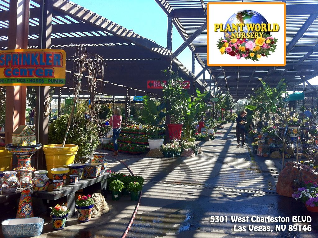 Plant World Nursery A Privately Owned Nursery Adorned With