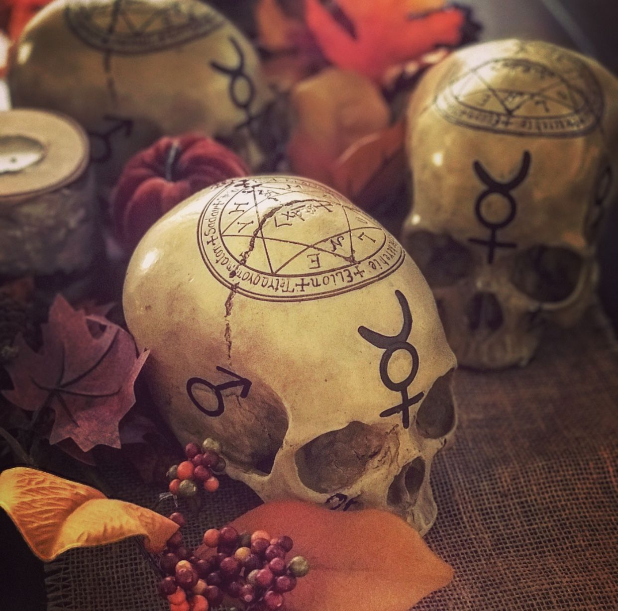 We found these beautiful Mystic Skulls and could not resist but to offer them in our store. Covered in Alchemical markings and Mystic symbols.  #moonmarket #witch #alchemy #witchcraft #witchy #witchery #witchesofinstagram #skull #replica #wicca #wiccan #pagan #neopagan #occult #magick #metaphysical #newage #spells #spellwork #mystic #altar #liveauthentic #instagood