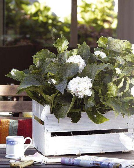 Macetas y jardineras una base con estilo cajas de fruta for Bases para jardineras