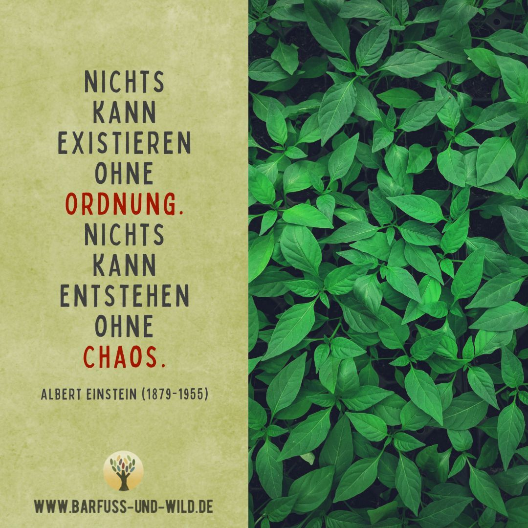 Nichts Kann Existieren Ohne Ordnung Nichts Kann Entstehen Ohne Chaos Albert Einstein 1879 1955 Weisheiten Weisheiten Spruche Spruche