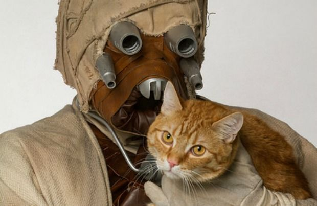 'Star Wars' Photos Give Shelter Pets a New Hope