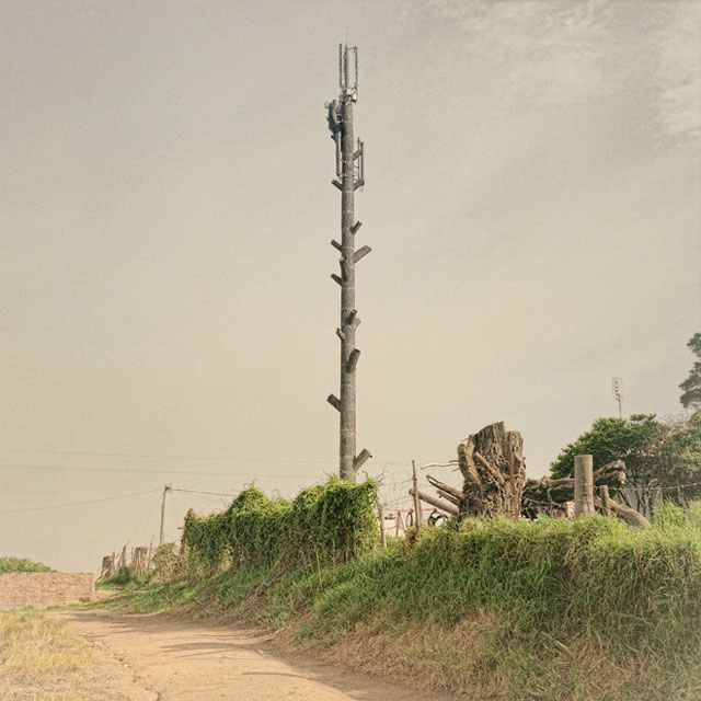 Photos of South African Cell Towers That are Disguised as Trees | Invasive  species, Cell tower, Photo
