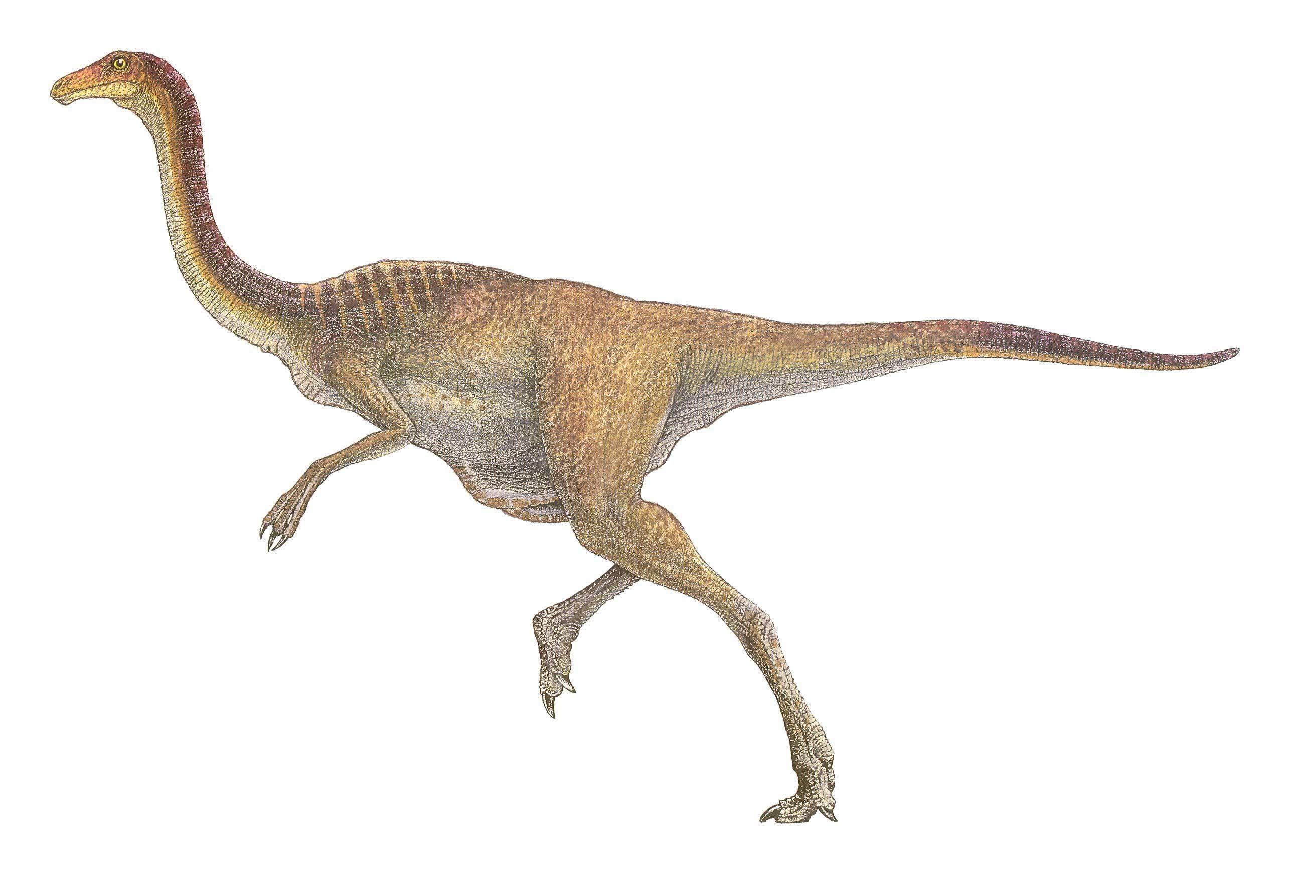 кривые меня картинка самый быстрый динозавр сей момент