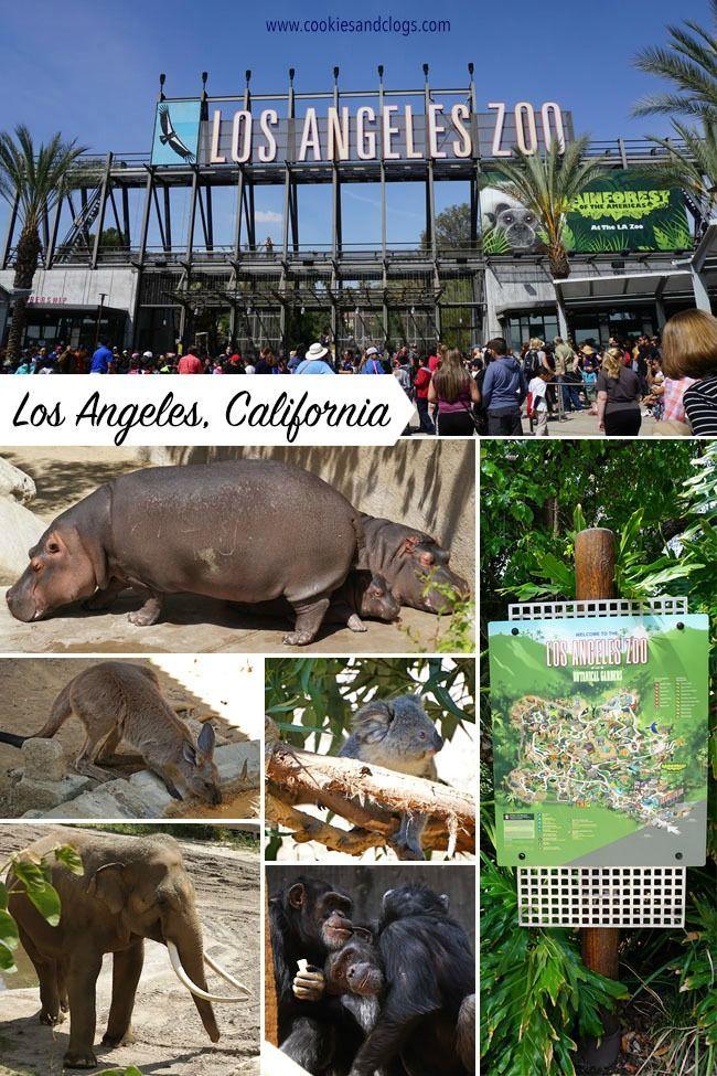 Monkey Kingdom Maya Me At The Los Angeles Zoo Los Angeles Zoo Monkey Kingdom Places Worth Visiting