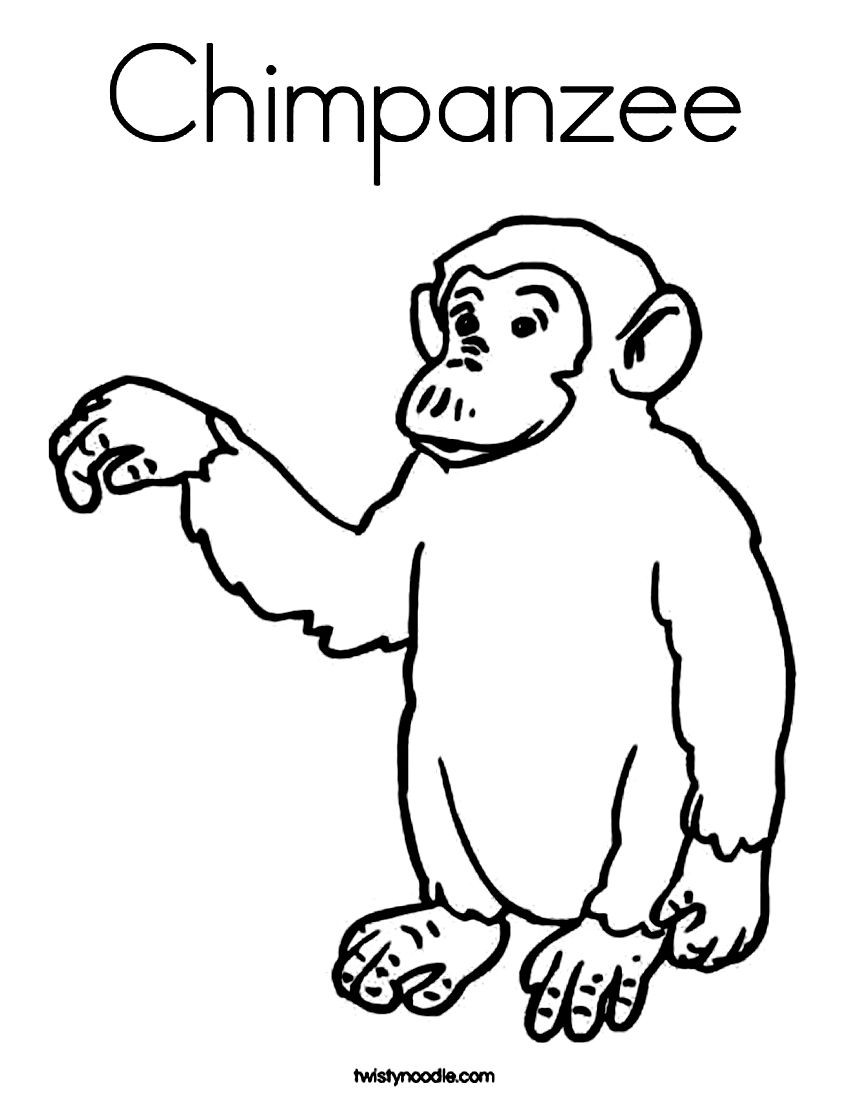 Chimpanzee Coloring Zoo Animals Coloring Pages For Kids Zoo