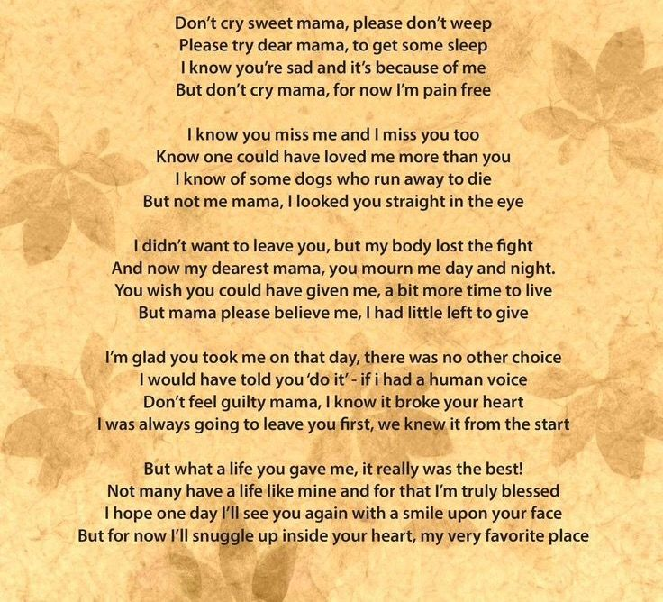 Don T Cry Sweet Mama Pet Grief Pet Loss Grief Miss My Dog