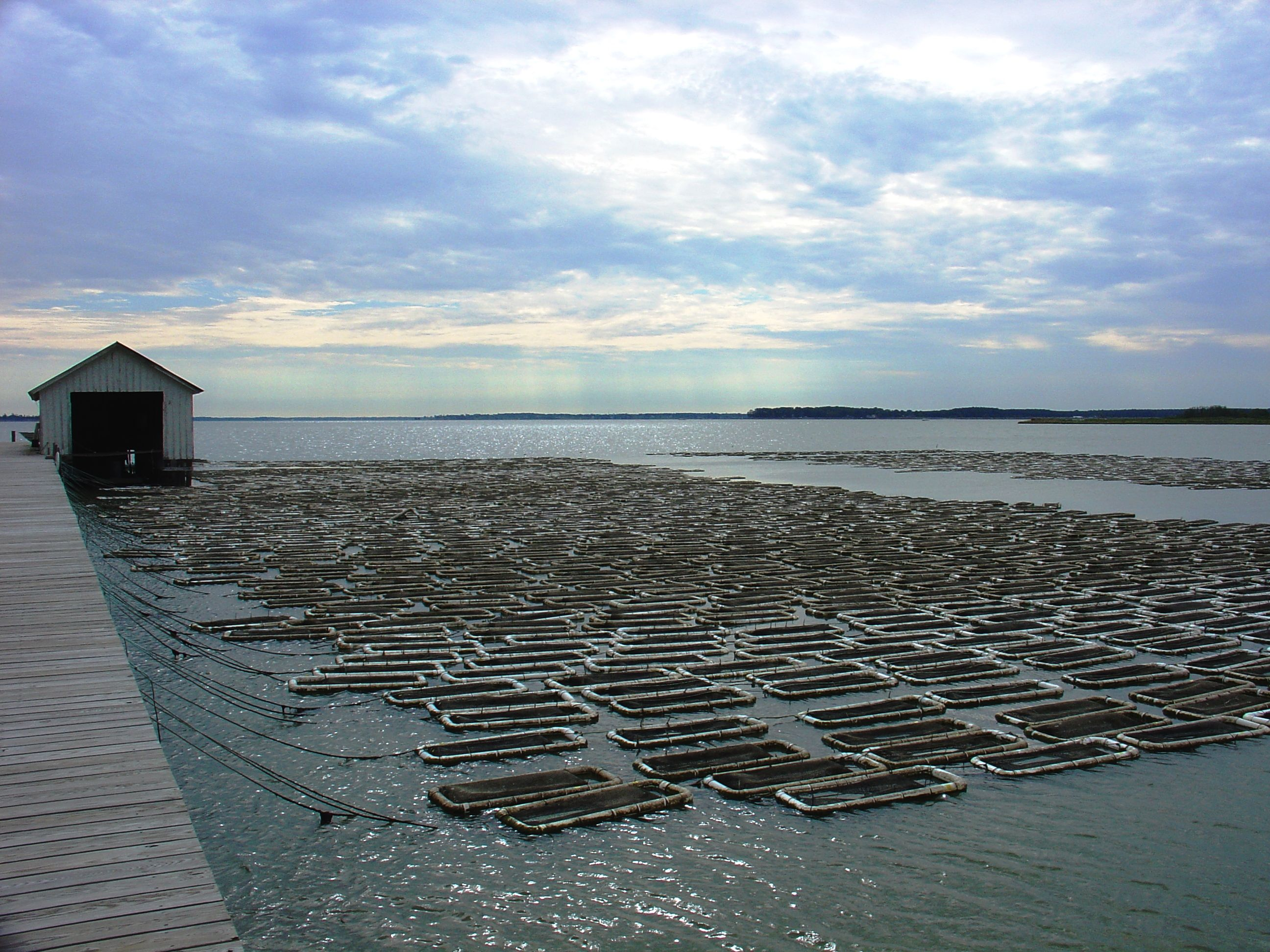 Noaa Fishwatch New Aquaculture Species Pages Launched Aquaculture Sustainable Seafood Oysters